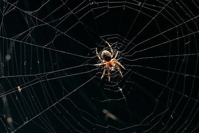 Kinh nghiệp lắp camera ngoài trời phòng tránh côn trùng